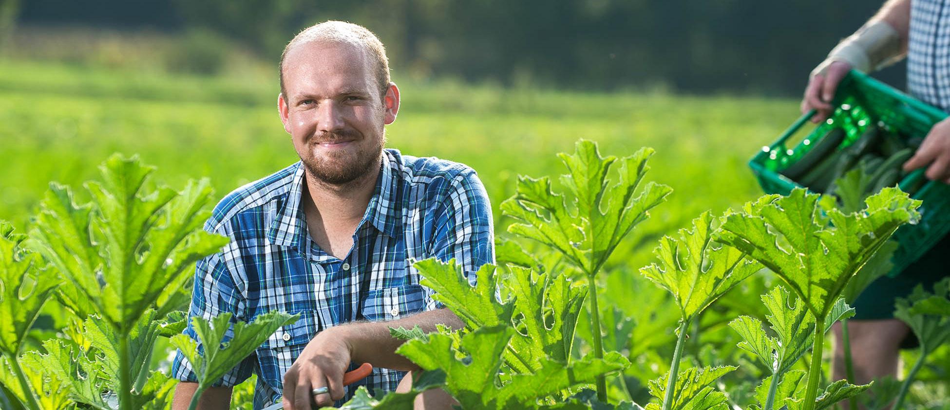 BARMETTLER Gemüsekulturen GmbH
