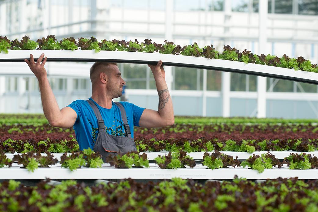 FORSTER Salatgarten AG