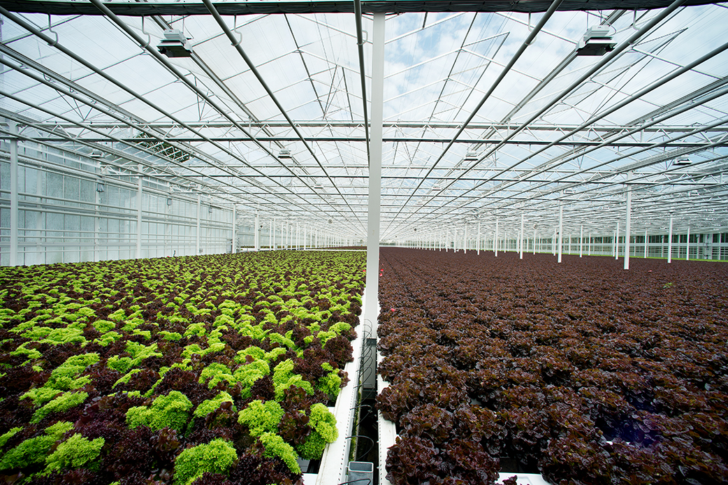 Salat_Forster-0202